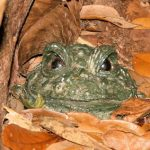 Modern day Parables: The frog in need of water